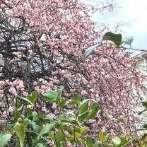 花だらけ「梅」の記事に添付されている画像