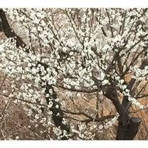 春ね^_^♡の記事に添付されている画像