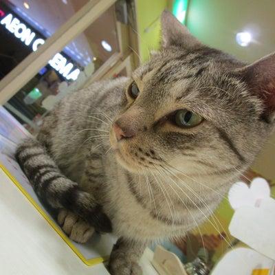 いよいよ明日は猫の日到来☆あいきゃっとにゃんずは準備万端にゃぜ!の記事に添付されている画像
