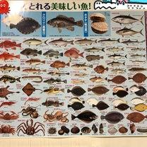 魚 さかな サカナの記事に添付されている画像