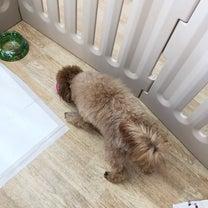 今日は食いしん坊メロディの写真から!の記事に添付されている画像