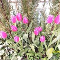 春の訪れ~梅田食レポの記事に添付されている画像