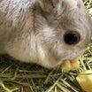 ウサギさんのお食事シーン