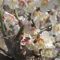【春の陽気の日はミツバチ君の羽音を聞きながら】の記事に添付されている画像