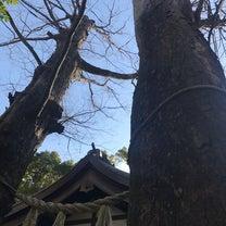 川越氷川神社3の記事に添付されている画像