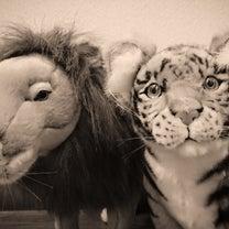 獅子と虎!?の記事に添付されている画像