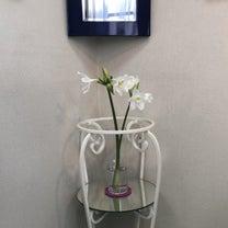 インテリア壁掛け仏壇と季節のお花:ユーチャリス(擬宝珠水仙)の記事に添付されている画像