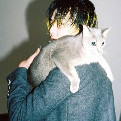ジヨスタと猫の日の記事に添付されている画像