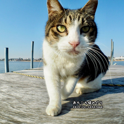猫の日ですよ〜(๑>◡<๑)の記事に添付されている画像