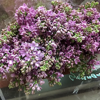 あなどれない輸入花たちの記事に添付されている画像