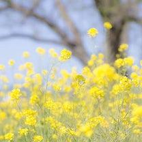 春が僕に教えてくれることの記事に添付されている画像