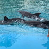 イルカとトラとライオン in ラスベガスの記事に添付されている画像