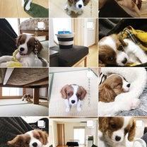 Instagramの記事に添付されている画像