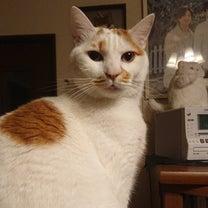 222猫の日ฅ•ω•ฅニャニャーン✧の記事に添付されている画像