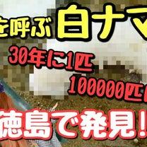 100000匹に1匹の珍しい白ナマコの撮影に成功【徳島】の記事に添付されている画像