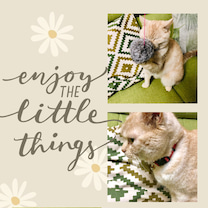 ネコの日♪の記事に添付されている画像