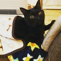 今日は猫の日の記事に添付されている画像