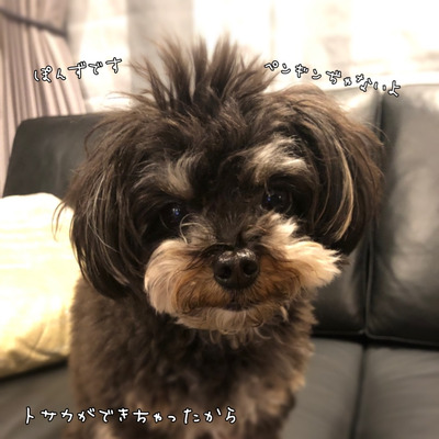3/23Dogtopia横浜青葉にてドッグヨガレッスン開催します!の記事に添付されている画像