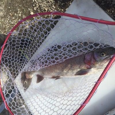 VS 大型魚 ふたたびの記事に添付されている画像