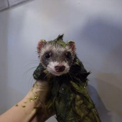 千葉 お風呂 プレミアム SKIMOの記事に添付されている画像