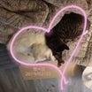 猫の日に猫と過ごせる幸せ