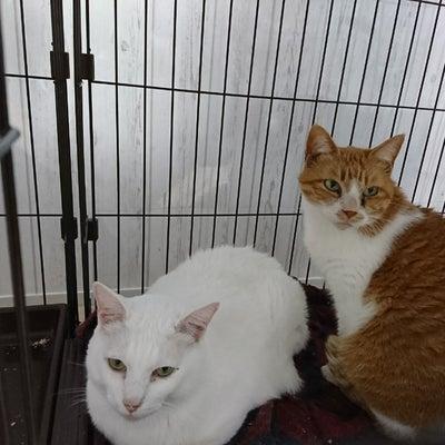 ウチの猫達の記事に添付されている画像