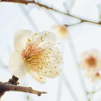 """春のお裾分け☆&人生は自分でどう選択し決断するかということ""""の記事に添付されている画像"""