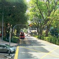 危うかったボタニカルガーデン@シンガポールの記事に添付されている画像