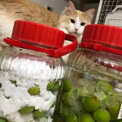 猫と梅とタルトの記事に添付されている画像