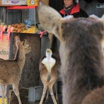 ☆今しか、ここでしか、宮島の鹿 №13☆の記事に添付されている画像