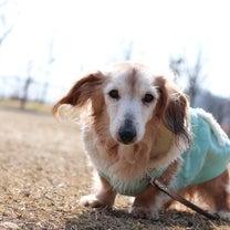 犬の健康ケアの新常識!!犬の癲癇発作はデトックスで予防するの記事に添付されている画像