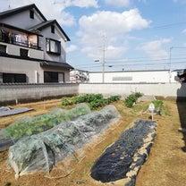 ほんまちこども園の農園です(^o^)♡の記事に添付されている画像