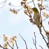 春の芽吹きの記事に添付されている画像
