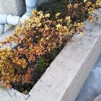 今日のタムラ/階段の補修/駐輪場/家庭教師の記事に添付されている画像