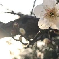 気づけば、梅の花が咲いている✨の記事に添付されている画像