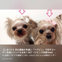 【しまむら】愛犬に超お得安心価格のラブリーヘアピンをの記事に添付されている画像
