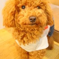 今日は何をお勉強する?~犬の幼稚園 ドッグホテル しつけ 一時預かり 送迎 ケーの記事に添付されている画像