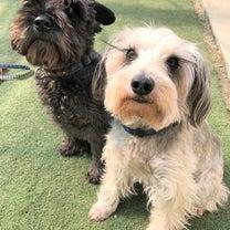 週末DOG's♪の記事に添付されている画像