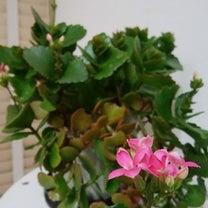 花のある生活の記事に添付されている画像