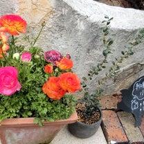 「小さなあとりえ*蕾」の花々/北野坂周辺の記事に添付されている画像