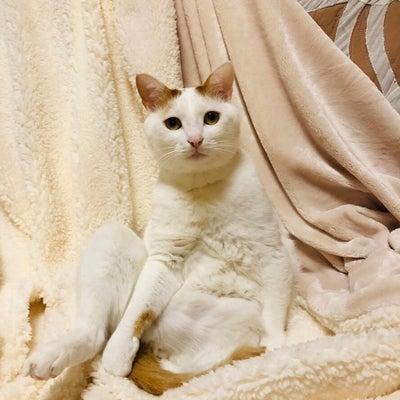 KAFU 3月31日までのご予約空き状況です☆の記事に添付されている画像