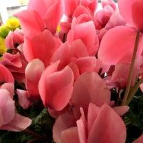 ♪  春よ来い ♪の記事に添付されている画像