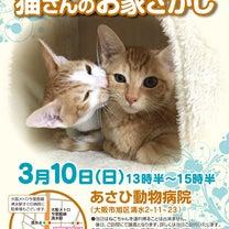 第5回ViVAキャッツ譲渡会の告知@大阪市旭区あさひ動物病院さんの記事に添付されている画像