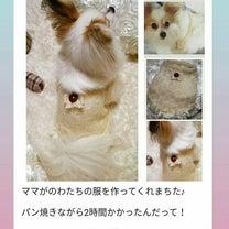 看板犬 ぴよちゃんU^エ^U❤の記事に添付されている画像