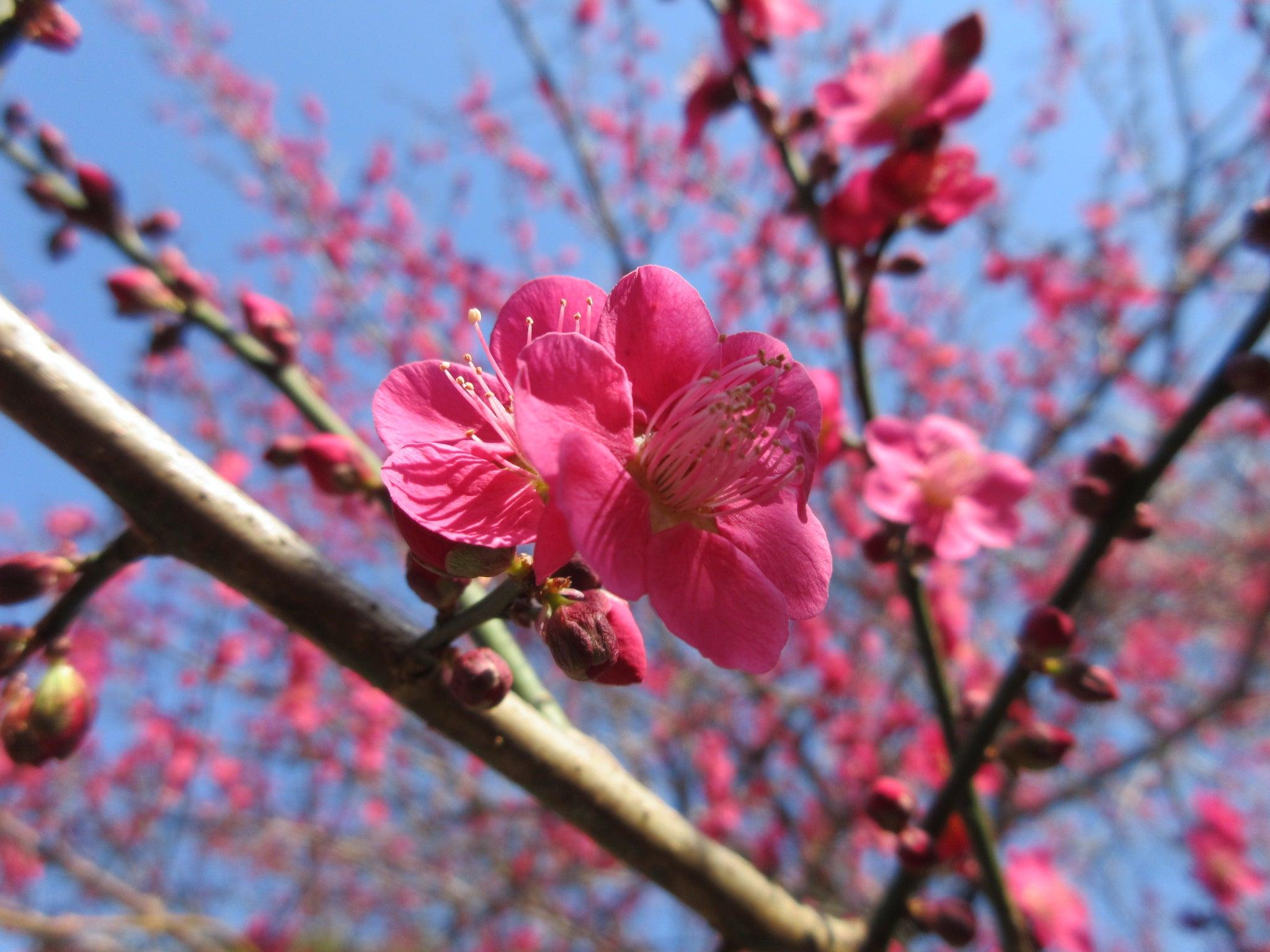 初春 の 令 月 と は