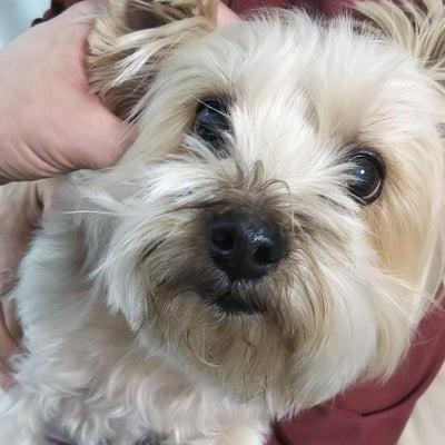 犬の耳を触ろう!の記事に添付されている画像