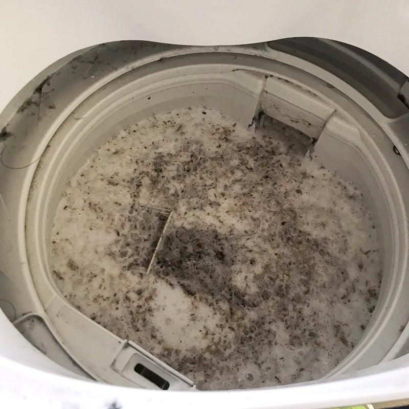 槽 の 取り 洗濯 カビ