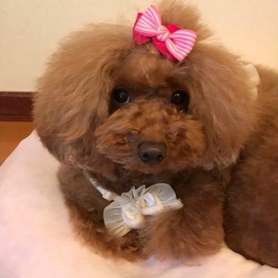 Bul Bu-Bu Winter Sale☆の記事に添付されている画像
