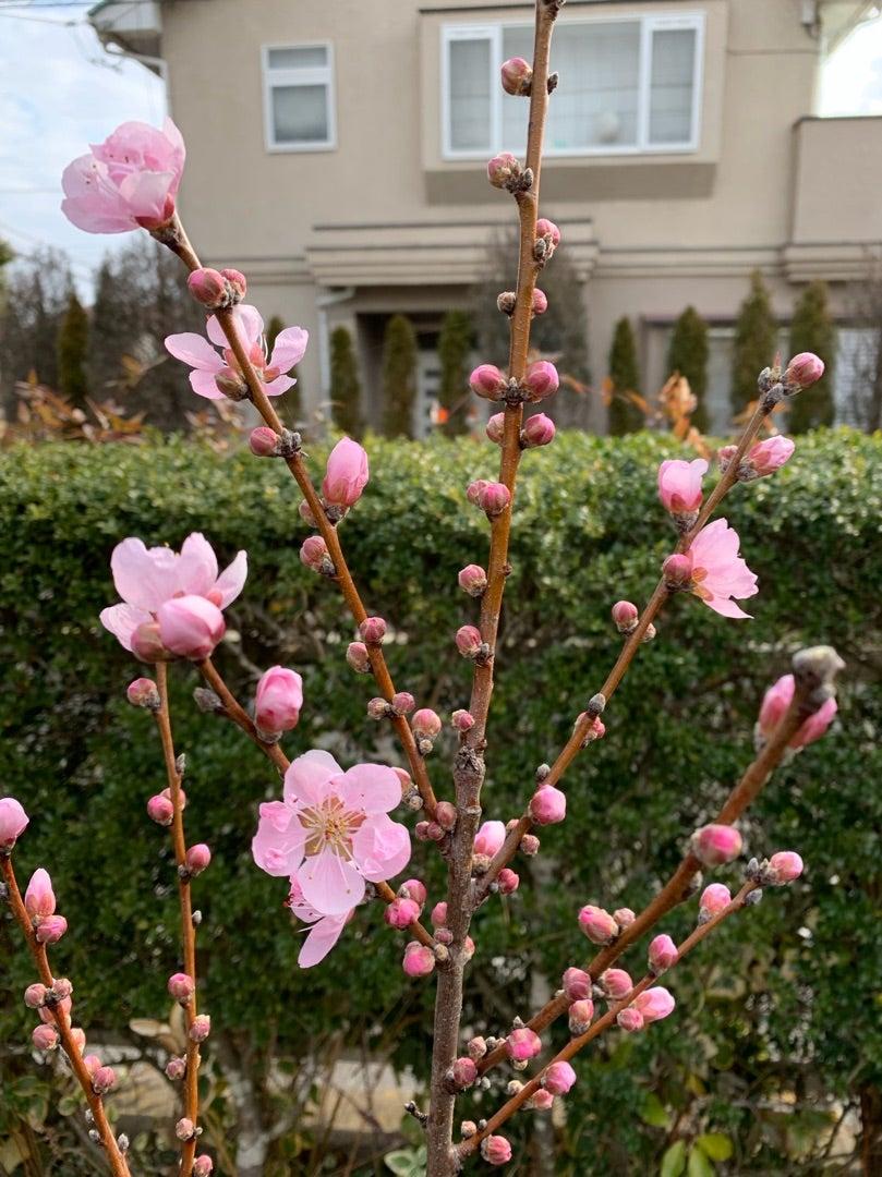 本日のブログは【 素敵なお花屋さんのスタッフ研修と費用対効果!】です。
