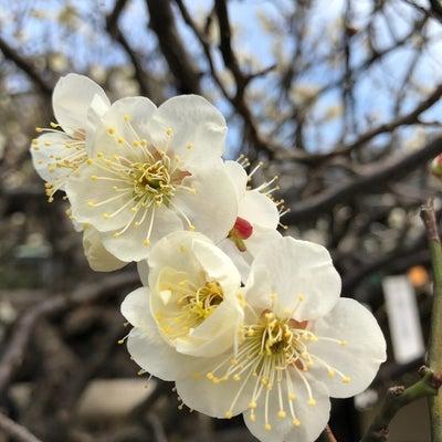 梅の記事に添付されている画像